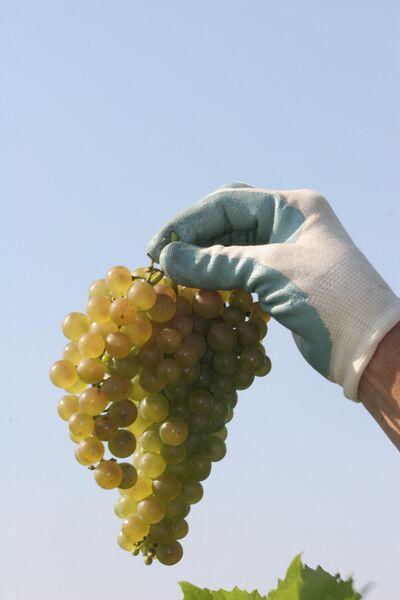 Snus Hill Winery Award Winning Iowa Vineyard Amp Winery
